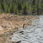 The source of our swamped portage trail came from this spectacle of beaver engineering, only a few feet from the trail.