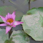 Lotus Flower, National Palace