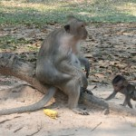 Momma and baby monkey at Bayon