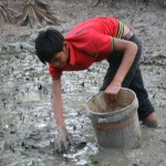 Brother gathering fish in the mud pond