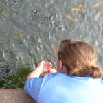 Sarah feeds the fish at the National Museum.