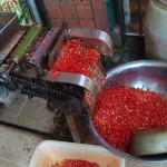 Red hot chili peppers being chopped to season Sichuan's spicy food.