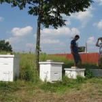 MS2010_AlcoholicBees_apiary