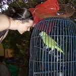 "Greta ""talking with"" the parrot at the Green Lodge in Pearl Lagoon, where half of our group stayed."