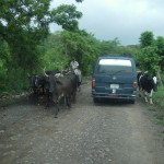 Typical traffic on those country roads between Estelí and the reserve.