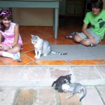 Geneviéve & Nathaniel visit a Granada hotel that fosters street cats