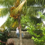 Martin climbing the coconut palm