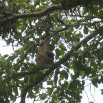 a sloth in a tree near Mary's house