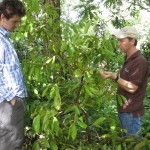 Jefferson, the owner of the farm, inspects a cinnamon tree with Robert.