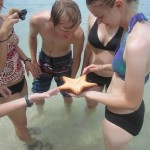 Live starfish in the waters off of the Caribbean island