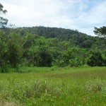 Across the field is the Yanesha Community Forest Reserve
