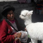 An andean woman with her alpaca
