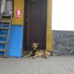 Dogs in Lima, view 1
