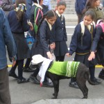 Dogs in Lima, view 2