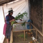 Clemencia's mini-cuy farm at her house