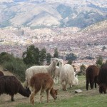 View of Cusco -- with llamas