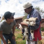 Pastor Celestino and the lamb that lives nearby