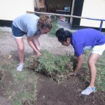 Removing weeds in the public school nearby