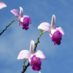 Orchids thrive in the rain forest