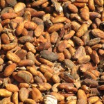 Close up of the cacao beans