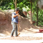 Spreading out cacao seeds to dry in the sun