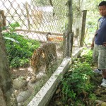 A tigre (jaguar) stalks our friend, Mateo
