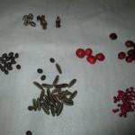 Seeds from the Peruvian rain forest