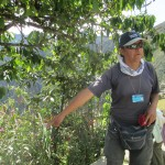 Oswaldo, our guide, identifies the native plants that grow here