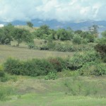 The Ayacucho countryside is becoming greener each day as the dry season gives way to rain