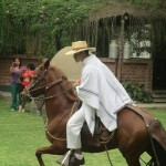 The Institute is devoted to the development of better animal breeds, including this caballo de paso (Peruvian stepping horse)