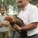 Gustavo shows us a fighting cock, describing the importance of cockfighting in traditional circles