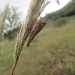 Langostas (grasshoppers) are an unwelcome sight -- the villagers are concerned that these insectors might eat their crops