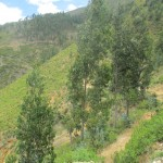 Some of the students live in the hills above Tarma and walk to school on this trail