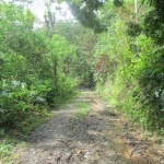 The road to Fundo Almorique Coffee Farm