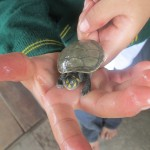 One of the boys shows off his pet turtle