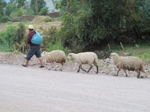 A shepherd walks past the church