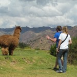 Encounter with an alpaca