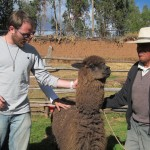 Alpaca wool is extremely soft and warm