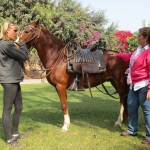 Introducing us to a caballo de paso (Peruvian walking horse)