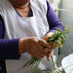 Alicia Taipe Tello explains the uses of Andean herbs.