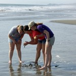 Aimee, Maria and Natalie examine sea life.