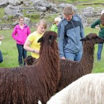 Students are one with alpacas.