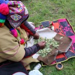 Shaman Basilio Samata prepares the coca leaves.