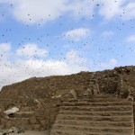 Birds take flight over an ancient pyramid at Caral.
