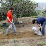 Brody and Andrew add fertilizer.