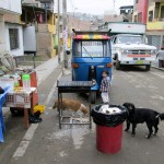 The mama of the new puppies, in front of Oswaldo's moto-taxi, looks for leftover chicken.