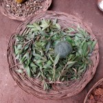 Eucalyptus is used as natural dye for green.