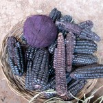 Wool dyed with purple corn.