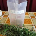 Muña is used to treat problems with the digestive system.
