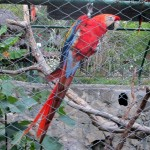 There were many lovely, and talkative, birds in the zoo in Ayacucho.